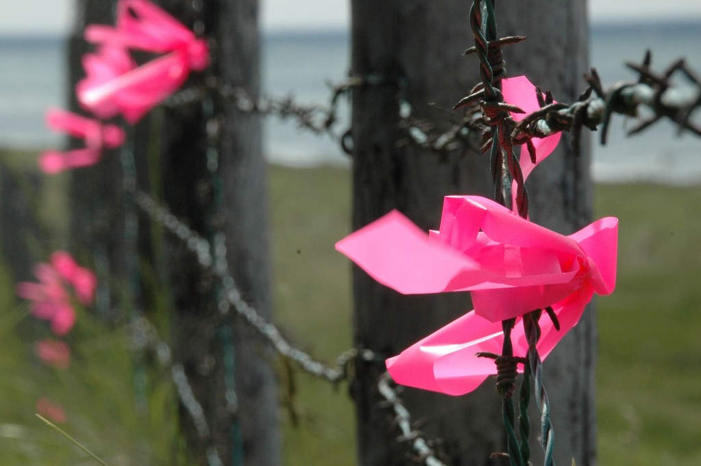 pink ribbons_installation