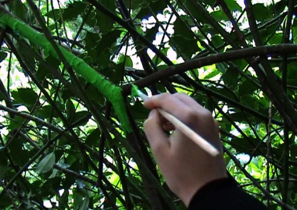 trace_green_video still